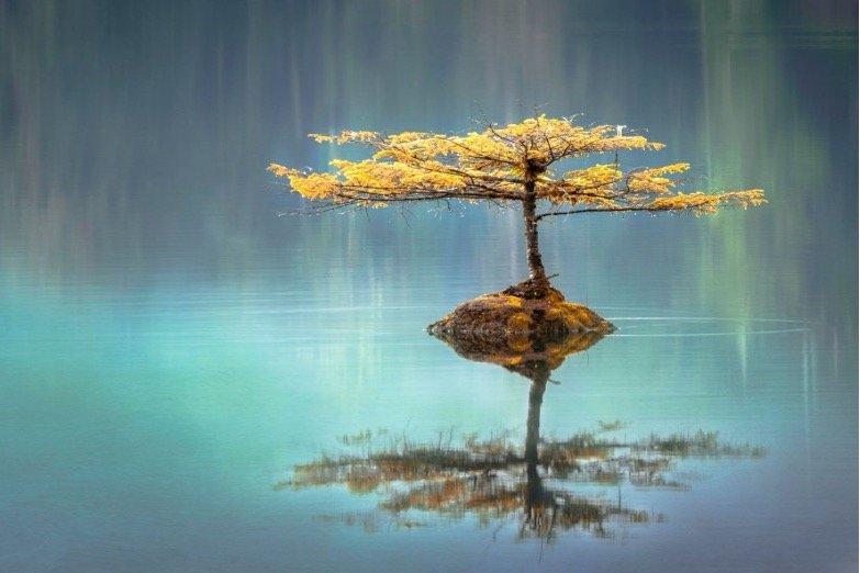 Yellow tree on rock in lake